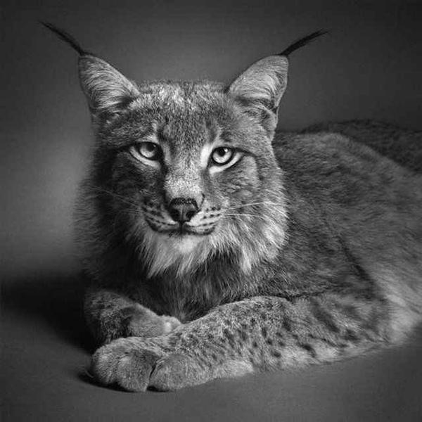 Bored To Death | Amazing Animal Pencil Drawings